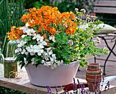 Nemesia Nemesis 'Orange', Dianthus chinensis