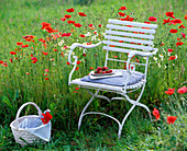 Flower meadow with Papaver rhoeas (poppy), Matricaria