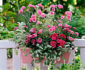 Incense box with Dianthus Devon Cottage 'Pink' and Adorable 'Tess'