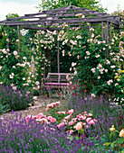 Pavilion with rose 'New Dawn', robust, often flowering