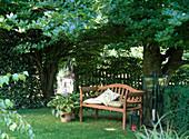 Wooden bench under Fagus (beech), Hosta (Funkie), lanterns