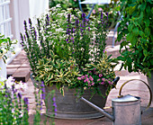Zinc sink with herbs