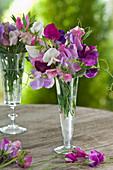 Lathyrus odoratus (sweetpea) in champagne glasses