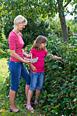 Mother and daughter picking rubus (raspberries)