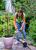 Funny climbing aid for Thunbergia