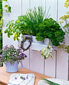 Herbs in enamelled pots in enamelled wall shelf