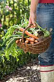 Woman with basket full of freshly harvested Daucus carota