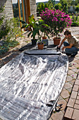 Inflatable greenhouse for wintering of potted plants