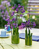 Gesteck aus Agapanthus (Afrikanischen Schmucklilie), Steckhilfe : Agapanthus