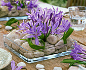 Table decoration with African ornamental lily