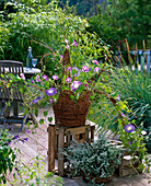 Braided basket of Salix (willow) with Ipomoea (Morning Glory)