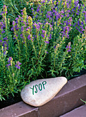 Stones as name tags for herbs