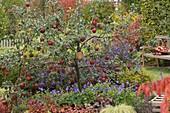 Malus 'Rewena' tree planted with Geranium 'Jolly Bee'