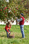 Grandfather with granddaughter picking apples on orchard