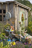 Garden shed, wheelbarrow, watering cans and garden tools in the garden