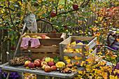 Freshly harvested Malus (apple), Cydonia (quince) and Corylus