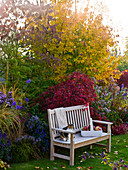Terraced garden with Parrotia, Acer palmatum