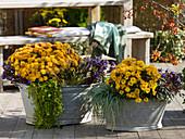 Alte Zinkwannen bepflanzt mit Chrysanthemum