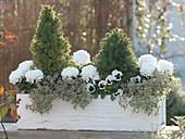 Green-white planted autumn box