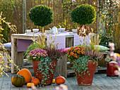 Terrasse mit unterpflanzten Buchs - Stämmchen