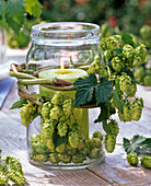 Screw cap glass as lantern with Humulus (hops)