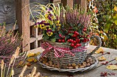 Wicker basket planted with Gaultheria procumbens (checkberry)