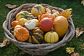 Basket with small pumpkin