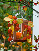 Lantern in the tree decorated with physalis (lantern flower)