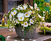 Autumn bouquet made of anemone (autumn anemone), hydrangea