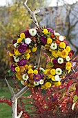 Potted wreath with chrysanthemums