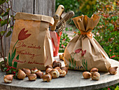 Tulipa (tulip), onions as a gift in paper bags