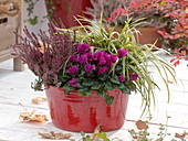 Autumn Bowl with Cyclamen (Cyclamen)
