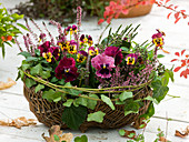 Wicker basket planted with viola
