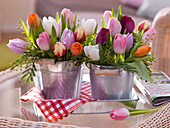 Tulipa (tulip) and Acacia (mimosa) in tin buckets