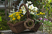 Plant early spring basket