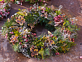 Autumn wreath of Pernettya (peat myrtle), Hedera (ivy)
