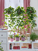 Hanging baskets with Efutute as a room divider