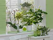Green-white window design with Phalaenopsis (Malay flower)