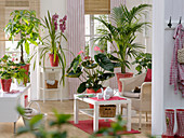 Living room with Anthurium andreanum (Flamingo flower), Cymbidium