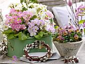 Primula acaulis (spring primrose) in metal jardiniere