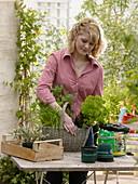 Plant a herb basket