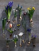 Tableau of onion flowers