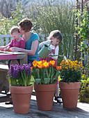 Hyacinthus 'Kronos', Tulipa 'Flair', Erysimum 'Bronze'