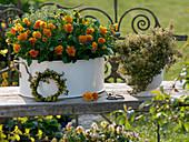 Viola cornuta Penny 'Orange', Thymus citriodorus 'Golden King'
