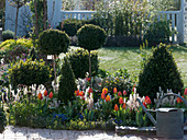 Green-white-orange bed with Buxus (box)