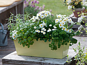Herbs and flowers sprinkled with edible flowers mixed-box