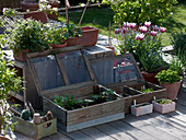Vegetable young plants in miniature cold frames and trays