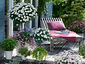 Wooden terrace with Argyranthemum 'Stella 2000'
