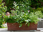 Herbs with herbs for frankfurter green sauce