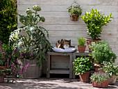 Herbal terrace